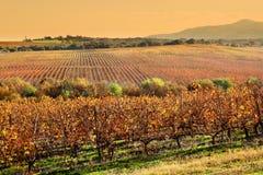 Vignobles en automne images stock