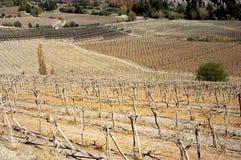 Vignobles en hiver Photographie stock libre de droits