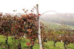 Vignobles en octobre Images libres de droits