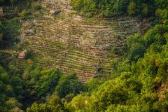 Vignobles en terrasse dans des sacrum de Ribeira, Galicie Images stock