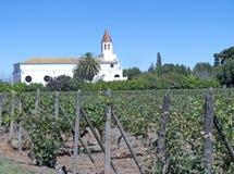Vignobles en vallée d'alto/Maipo de Puente, Chili images stock