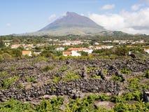 Vignobles et bâti Pico, Pico Island, Açores photos stock