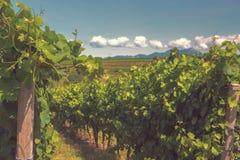 Vignobles et collines de Langhe en été images libres de droits