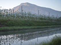 Vignobles et pommiers en vallée Trentino de vallagarina Photos libres de droits