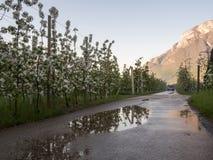Vignobles et pommiers en vallée Trentino de vallagarina Image libre de droits