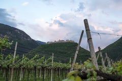 Vignobles et pommiers en vallée Trentino de vallagarina Images libres de droits