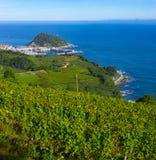Vignobles et production vinicole avec la mer cantabre à l'arrière-plan photographie stock libre de droits