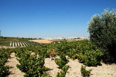 Vignobles et ville, Montilla Photos stock