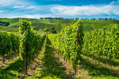 Vignobles le long de la rivière de la Moselle, Luxembourg Image libre de droits