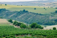 Vignobles le long du Danube en Bulgarie est du nord photos stock