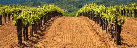 Vignobles secs de vallée de crique Photos stock