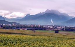 Vignobles suisses avec des montagnes images stock