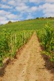 Vignobles sur des hils par la Moselle River Valley Photo libre de droits