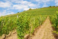 Vignobles sur des hils par la rivière de la Moselle Photos stock
