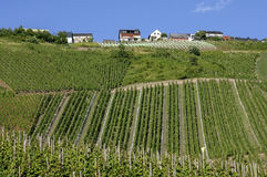 Vignobles sur le village de vin de la Moselle, Allemagne Images stock