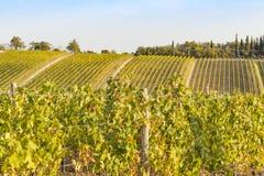 Vignobles sur les collines de la Toscane pendant l'heure d'or en automne i Photographie stock libre de droits