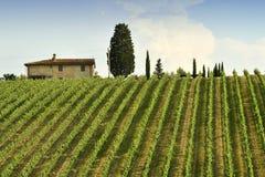 Vignobles verts pendant la saison d'été dans la région de chianti près avec le ciel nuageux bleu, Italie photos libres de droits