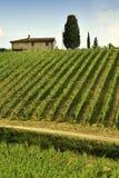 Vignobles verts pendant la saison d'été dans la région de chianti près avec le ciel nuageux bleu, Italie photo libre de droits