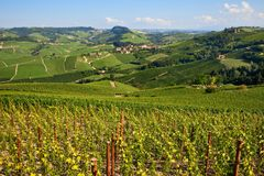 Vignobles verts sur les collines de Langhe en Italie photo stock