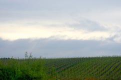 Vignobles verts vus contre un ciel orageux photographie stock