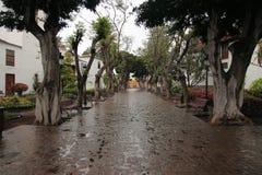 vignos дождя de icod los Стоковые Фотографии RF