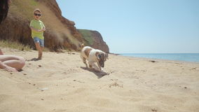 Vigorous dog breed Jack Russell plays in the sand stock video