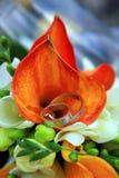 Vigselringar Royaltyfria Bilder
