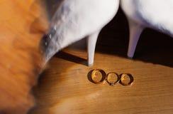 Vigselringar för ett bröllop denna lyckliga dag Fotografering för Bildbyråer