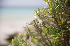 Vigselringar för strandbröllopceremoni Fotografering för Bildbyråer