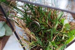 Vigselringar från vit guld i en glass ask fyllde med mossa, grönska och gräs Detaljer och dekor av lantlig ceremoni Fotografering för Bildbyråer