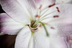 Vigselringar i en liljaknopp arkivfoton