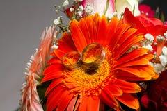 Vigselringar och orange blomma Arkivbilder
