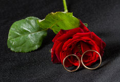 Vigselringar och röd ros Royaltyfri Foto