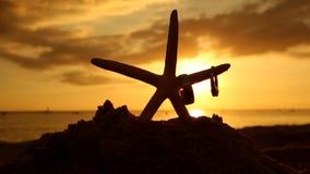 Vigselringar och sjöstjärnan på stranden på solnedgången älskar begrepp stock video