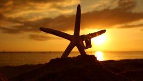 Vigselringar och sjöstjärnan på stranden på solnedgången älskar begrepp arkivfilmer
