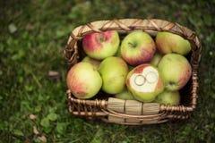 Vigselringar på äpplen Arkivbild
