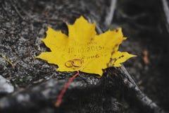 Vigselringar på en gul lönnlöv Royaltyfria Bilder