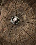 Vigselringar på en trädstubbe som visar cirklarna av trädet Arkivbild