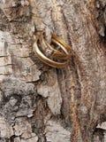 Vigselringar på trädskäll Royaltyfri Fotografi