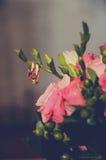 Vigselringar som hänger på en kvist från buketten Royaltyfri Foto