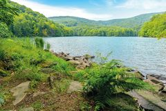 Vihorlat lake slovakia. Body of water among beech forest in mountains. popular destination in eastern europe. sunny summer weather with clouds on the sky stock photo