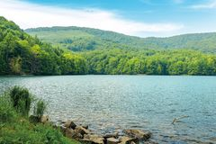 Vihorlat lake slovakia. Body of water among beech forest in mountains. popular destination in eastern europe. sunny summer weather with clouds on the sky stock photography