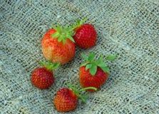 Vijf aardbeien Royalty-vrije Stock Afbeelding