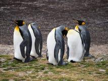 Vijf bevindende Koning Penguins met Drie die gladstrijken royalty-vrije stock afbeelding