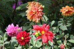 Vijf bloemen Royalty-vrije Stock Foto
