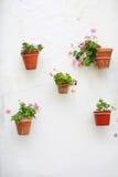 Vijf bloempotten Stock Foto's