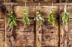 Vijf bossen van geassorteerde verse kruiden die omhoog hangen stock foto
