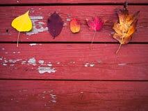 Vijf dalingsbladeren op hout Stock Foto's
