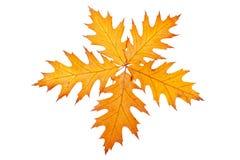 Vijf de herfstbladeren Royalty-vrije Stock Afbeeldingen