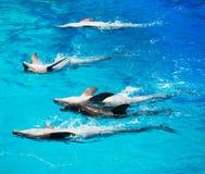 Vijf dolfijnen Stock Afbeeldingen